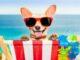 Reisen mit Hund: Tipps für Flugzeug, Zug und Auto